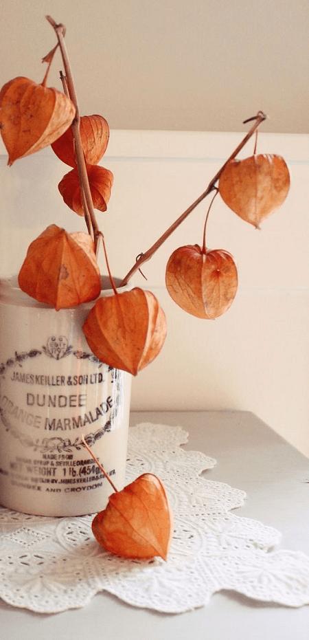 otoño hojas secas