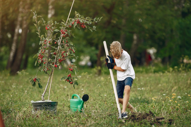plantar arbol navidad