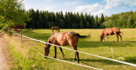 Qué son los pastores eléctricos y cómo funcionan