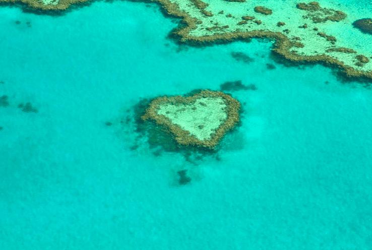 australia coral