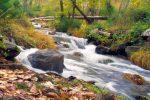 ecosistemas de agua dulce 1